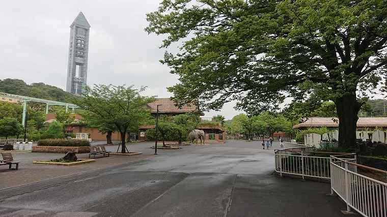 東山動物園_雨_人が少ない