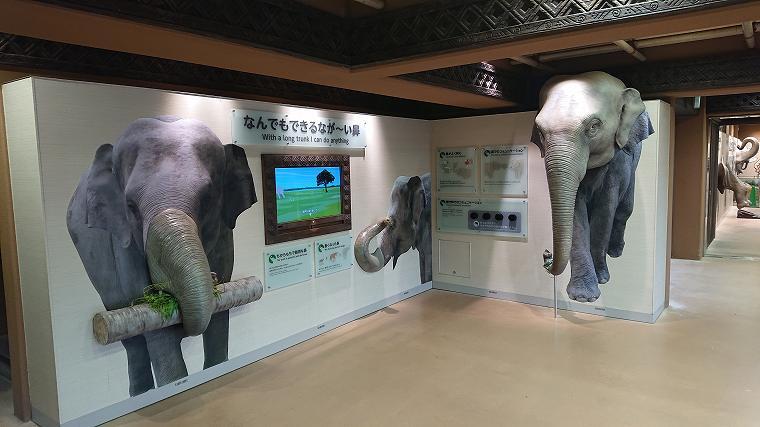ゾウ舎の展示1