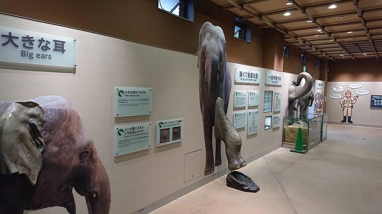 ゾウ舎の展示2