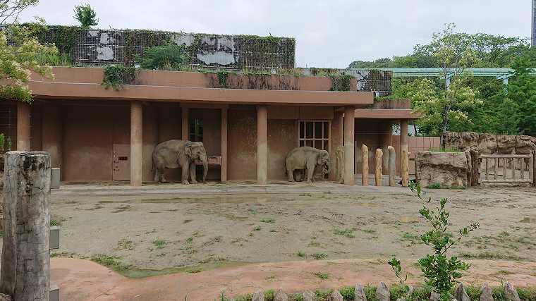 ゾウ舎の象