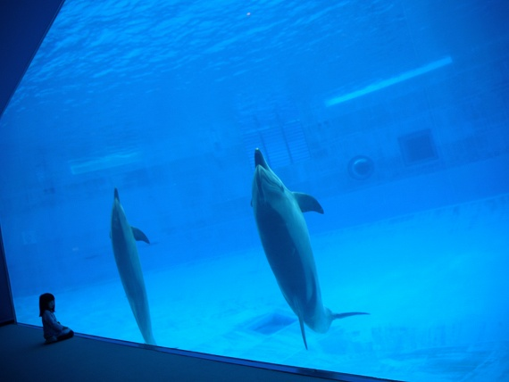 水中観覧席1