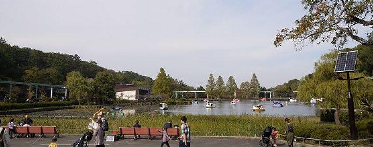 東山動物園の上池