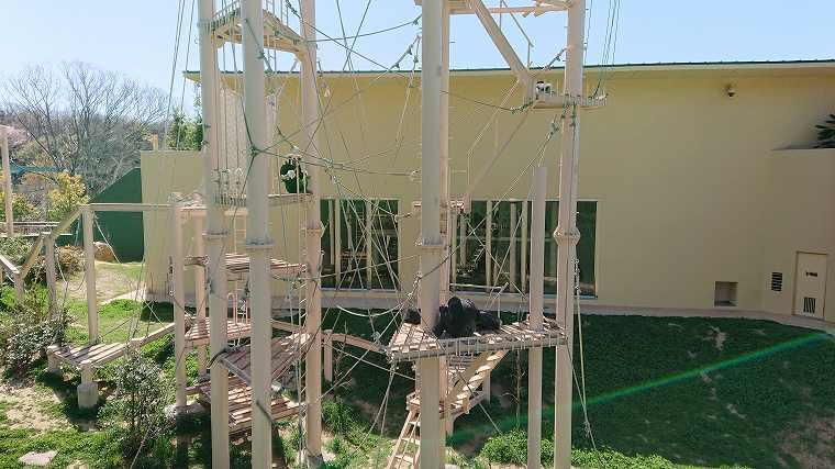 チンパンジー舎