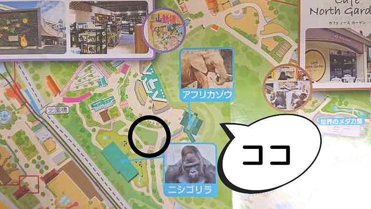 MAP-チンパンジー舎裏の芝生広場
