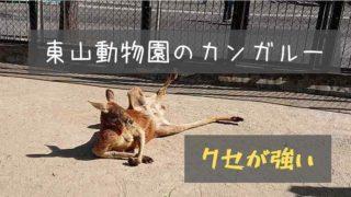 東山動物園のカンガルー