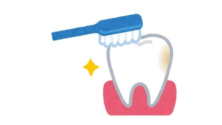 歯ブラシで綺麗に歯を磨く